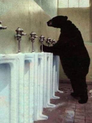 Here's a picture of a bear, taking a pee. That's how you donate to charity, ...